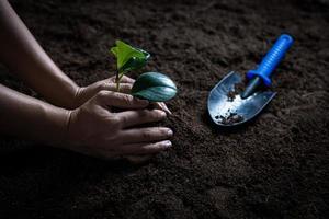 Hand hold sapling on soil photo