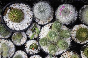 Cactus plant pots
