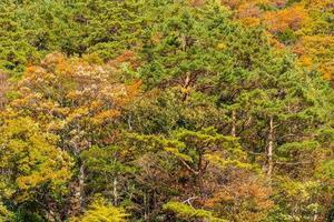 Maple trees in autumn season