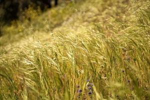 hierba en la ladera en primavera foto