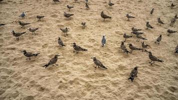 A flock of seabirds on the sand