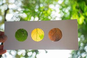 Orange, yellow, and green leaves set in paper, reminiscent of a stoplight, backlit with forest background
