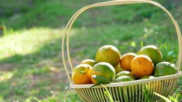 Fresh oranges with leaves in basket on green grass in sunshine.