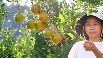 Woman gardener holding pruning shears and picking ripe oranges