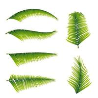 Collection of palm leaves isolated on white background for your creativity vector