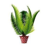 Palm tree in pot isolated on white background for your creativity vector