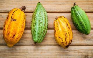 Ripe cocoa pods photo