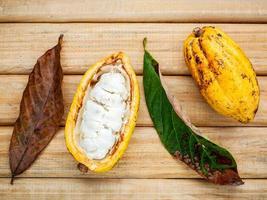 mazorcas de cacao en madera foto