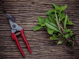rama de hierbas frescas foto