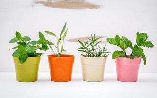 hierbas de jardín en macetas foto