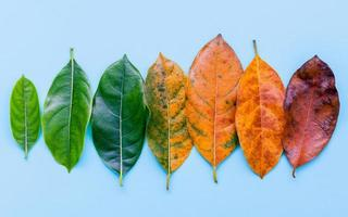 fila de hojas de otoño
