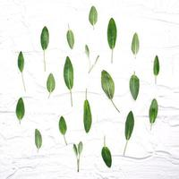 Fresh sage leaves on white wooden background photo