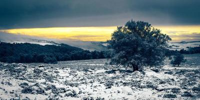 Landscape of lone tree in snow with hills, forest, and mountains in background with colorful cloudy sky photo