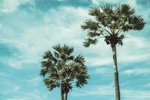 palmeras de coco en el fondo del cielo