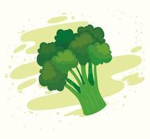 fresh broccoli vegetable, healthy food concept vector