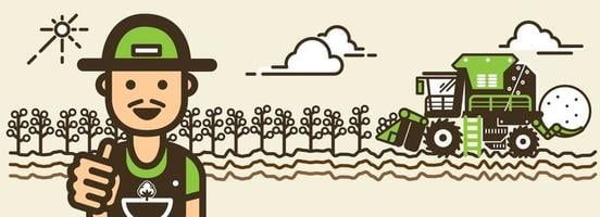 Cotton harvesting vector illustration.