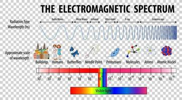 Science Electromagnetic Spectrum diagram vector