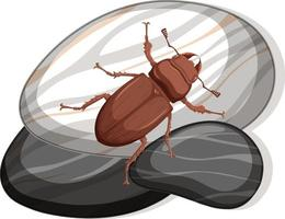 Top view of carabidae on a stone on white background vector