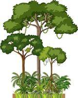 Set of different rainforest trees on white background vector
