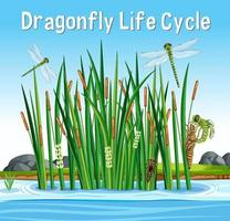 Dragonfly Life Cycle font in swamp scene vector