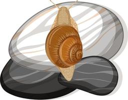 Top view of snail on a stone on white background vector