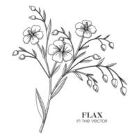 A SKETCH OF A FLAX BRANCH ON A WHITE BACKGROUND vector