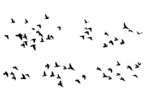 Flying birds silhouettes pattern wallpaper. Vector illustration. isolated bird flying. tattoo design. template for card, package, and wallpaper.