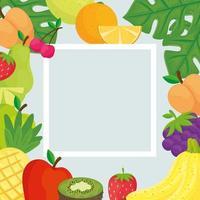 marco cuadrado con frutas tropicales frescas vector