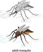 Mosquito en color y doodle sobre fondo blanco. vector