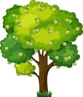 Árbol frutal de guayaba en estilo de dibujos animados aislado sobre fondo blanco. vector