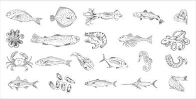 plantilla de menú de restaurante de mariscos. vector. vector