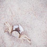 White crab in sand photo