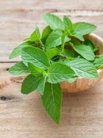 Mint leaves in a bowl photo