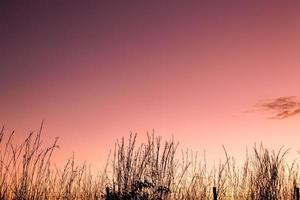 Lindo por do sol com detalhes da vegetacao contra a luz dourada em degrade. Background lindo plano de fundo