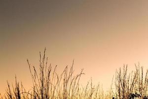 Lindo por do sol com detalhes da vegetacao contra a luz dourada em degrade.