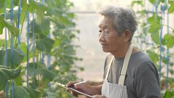Gardener monitoring plant growth.