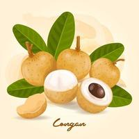 Logan, a fruit with a sweet taste vector