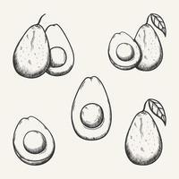 Ilustración de dibujo de vector de fruta de aguacate