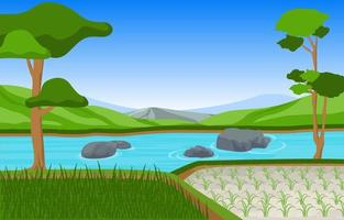 Rice Paddy Field Ready for Harvest Illustration vector