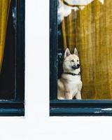 un perro en amsterdam, países bajos foto