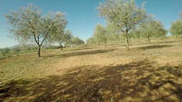 Flight Through the Olive Grove