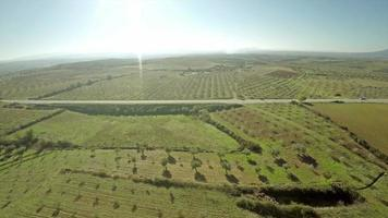 Aerial View of an Olive Grove in Portugal