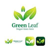 plantilla de diseño de logotipo de hoja verde