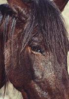 A beautiful brown horse portrait