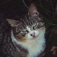 Beautiful grey stray cat portrait