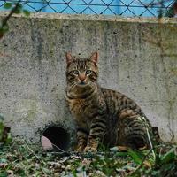 A beautiful stray cat portrait
