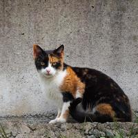 Beautiful stray cat portrait