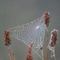 Spider web on the dry plants in nature