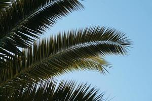 hojas de palmera verde y cielo azul foto