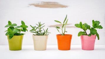 plantas de hierbas en macetas foto
